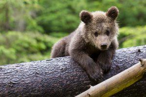 Der Bär macht Brumm - schnelle Entspannung