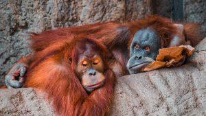 10 Ideen gegen Langeweile …für deine Umwelt