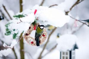 Advent in der Kita – ein Geschenk für unsere Vögel